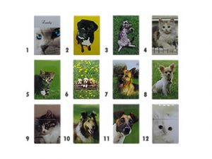 3118-CD Cats and Dogs